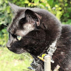 Lucky in Deep Thoughts by Marion Metz - Animals - Cats Portraits ( cat, lucky, beautiful, garden, new zealand, black )