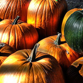 Shady Pumpkins by Diane Underwood - Food & Drink Fruits & Vegetables ( orange, shady, green, pumpkins,  )