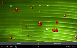 Screenshot of Ladybug Live Wallpaper