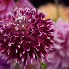 by Liz Okon - Flowers Single Flower