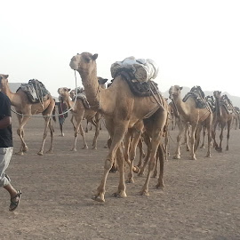 now at the Danakil depression by Royal Ethiopia Tours - Transportation Other