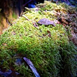 Sun shining through by Cassie Geurin - Nature Up Close Mushrooms & Fungi