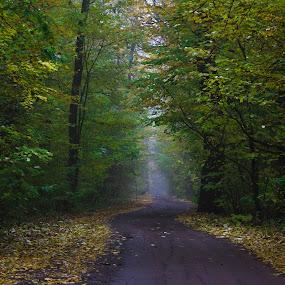 Forrest road by Jean Bogdan Dumitru - Novices Only Landscapes (  )