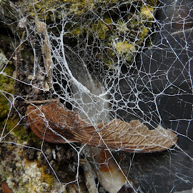 by Eli Cholakova - Nature Up Close Webs