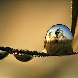 dew by Wahyu Budiyanto Toak - Nature Up Close Natural Waterdrops ( reflection, macro photography )