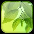 Free Leaf Live Wallpaper APK for Windows 8