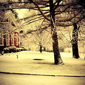 Snowfall by Brooke DeLong - City,  Street & Park  Street Scenes