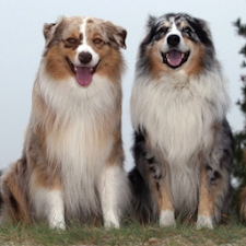 Top 50 Dog Breeds 1 FREE