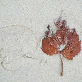 Leaf print on Sand by Suhas Mate - Nature Up Close Leaves & Grasses ( water, sand, leaf, sunlight, print )