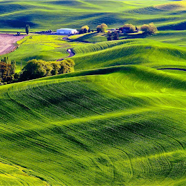 Waves in Nature by Gabriel Gutierrez - Landscapes Prairies, Meadows & Fields ( palouse, hills, nature, green, textures, fields, path, landscape )