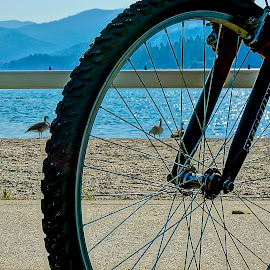 Bike at the Lake by Barbara Brock - Transportation Bicycles
