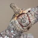Twig spider