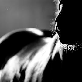 Horse Sense 25 by Norie Dani - Animals Horses ( equine, horses, black and white, horse sense, noriedani )