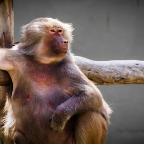 by Sandeep Das - Animals Other Mammals (  )