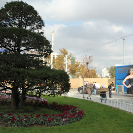 Tree at Taksim Square -  Istanbul by Luci Henriques - City,  Street & Park  City Parks