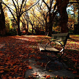 Autumn in Vancouver by Lance Nguyen - City,  Street & Park  City Parks