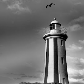 The Mercey Bluff lighthouse. by Esther Van De Belt - Buildings & Architecture Public & Historical ( tasmania, seagull, mercey, lighthouse, devonport, stripes, bluff,  )