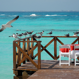 Dinner Time by Greg VandeLeest - Landscapes Travel ( dinner, chairs, ocean, table, beach, dock, gulls )