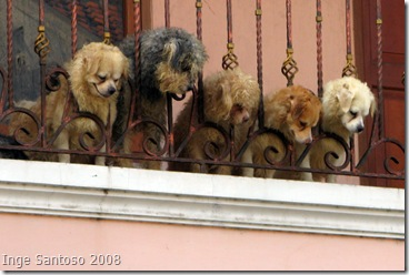 dogs curiosity