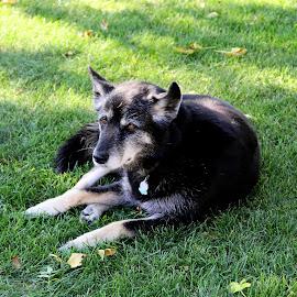 by Jazz Johnson - Animals - Dogs Portraits