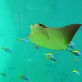 by Crissy Farinella - Animals Fish