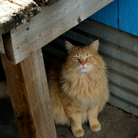 Buddy on goffer patrol 2 by Robert Reninger - Animals Other Mammals ( natural light, animals, cat,  )