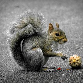 Jo Jo 2 by Gregg Pratt - Animals Other Mammals ( squirrel )