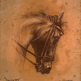 CAVAL DONATO by Mario Mariom - Drawing All Drawing
