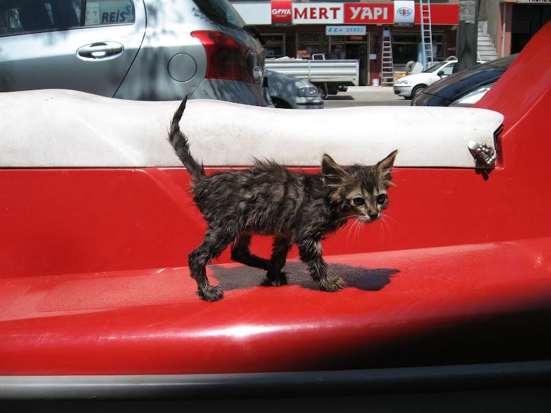 minik kedicik Çektiğim bazı fotolar