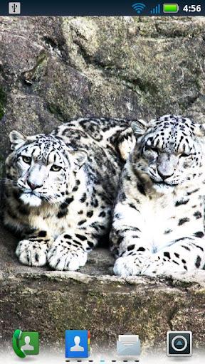 大型貓科動物動態壁紙