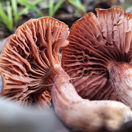 by Nicci Lawson - Nature Up Close Mushrooms & Fungi ( mycology, fungi )