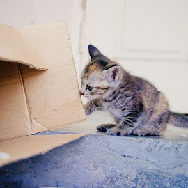 What's in this for me by Haikal Rshd - Animals - Cats Kittens ( cat, kitten, meow, street, feline )