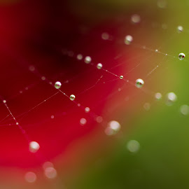 Margele by Daniel Alexandru - Nature Up Close Natural Waterdrops ( water, macro, nature, drops, spider, web, close up )