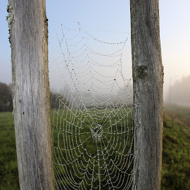 Spider web and pearls of water by Jarmo Ainasoja - Animals Insects & Spiders