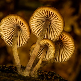 Fungis from behind by Peter Samuelsson - Nature Up Close Mushrooms & Fungi