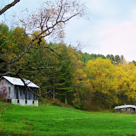 fall and the tobacco barn by Delores Mills - Buildings & Architecture Other Exteriors ( fall, color, colorful, nature )