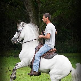 Hold it by Pablo Barilari - Animals Horses ( horses, horse, white horse )