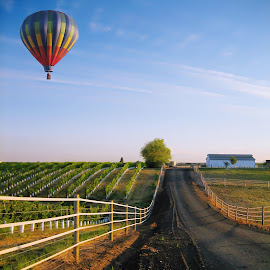 First Light At The Vineyard by Richard Saxon - Landscapes Prairies, Meadows & Fields ( wine, washington, walla walla, vineyard, grapes, balloon, morning )