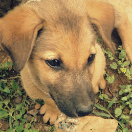 dz pup stole my heart..omg!! so naughty..adorableshriya dz is fo u ! ! ! by Arvind Karthik - Animals Other