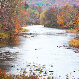 Autumn colors along the Lackawaxen River by Jody Rowe - Nature Up Close Trees & Bushes ( fallcolorchallenge1, fall, color, colorful, nature )