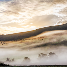 Migration by Neil Gosling - Landscapes Cloud Formations ( hills, usk, wales, silhouette, monmouthshire, valley, feather, flying, mists, autumn, contre jour, whisp, clouds, migration, uk, migrate, early morning, flight, dawn, fog, fly, fall, sunrise, geese, mist )