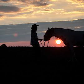 Jamie at sunset by Nicky Staskowiak - Animals Horses ( tinker, horses, backlight, sunset )