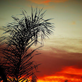 Pine Fronds. by Dave  Horne - Nature Up Close Trees & Bushes