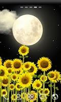 Screenshot of ♥ Sunflowers Free