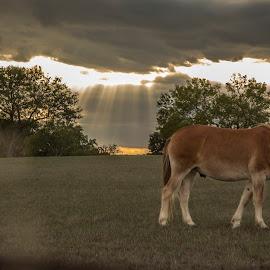 by Kelley Hurwitz Ahr - Animals Horses ( churches, texas, october 2014 )