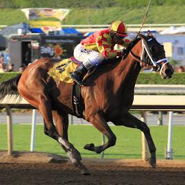 And Away They Go by Rachel Pindroh - Animals Horses ( horseback, horse race, jockey, horse, thoroughbred, race,  )