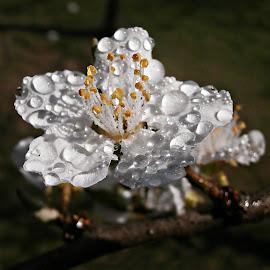 Dancing Droplets & Shadows by Marija Jilek - Flowers Flowers in the Wild