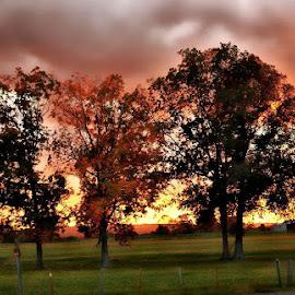 Three Tree Meadow by Rhonda Musgrove - Landscapes Prairies, Meadows & Fields ( field, sky, autumn, meadow, trees )