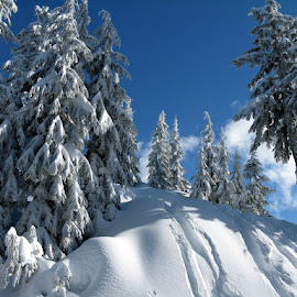 Winter in the Mountains by Elena Stanescu-Bellu - Nature Up Close Trees & Bushes ( sky, blue, snow, white, pine trees, covered )