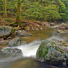 by Siniša Almaši - Landscapes Forests ( stream, tree, nature, color, stone, rock, forest, landscape, woods )